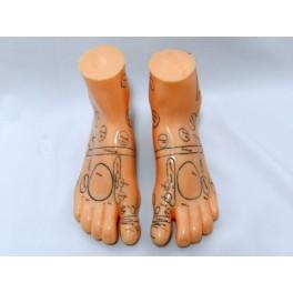 Model studiu reflexoterapie si masaj -picioare (cod S3)