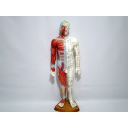 55 cm male study model for acupuncture (code S14)