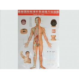 Set planse acupunctura corp barbat (cod H11)