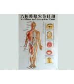 Acupuncture map set - male (code H12)