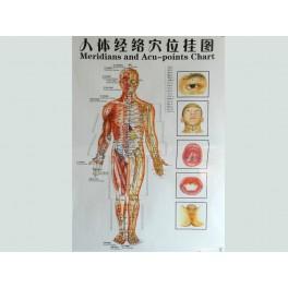 Set planse acupunctura - barbat (cod H12)