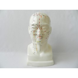 Mulaj studiu acupunctura bust (cod S07)