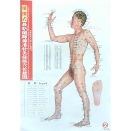 Set planse acupunctura corp barbat - dimensiune mica (cod H13-1)