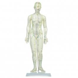 Mulaj studiu acupunctura femeie 48 cm (cod S13)
