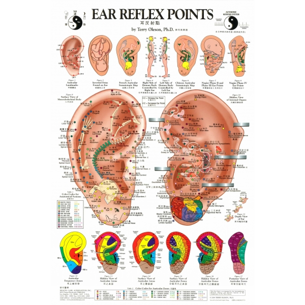 acupunctura in ureche pentru slabit ultimate băutură de ardere a grăsimilor