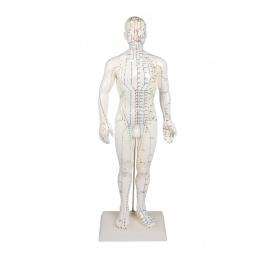 Mulaj studiu acupunctura barbat 60 cm (cod S10)