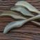 Dispozitiv multifunctional, Gua Sha, masaj (cod G24)