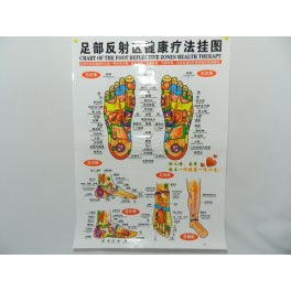 Plansa picior pentru reflexoterapie (cod H9)