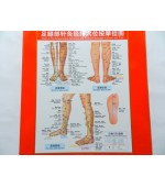 Foot and lower leg map for acupuncture, meridans and massage (code H10)