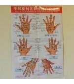 Plansa mana pentru reflexoterapie si acupunctura (cod H06)