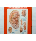 Ear map for reflexology and acupuncture (code H04)