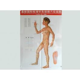 Set planse acupunctura corp femeie (cod H02)