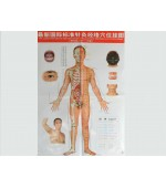 Acupuncture points map set male (code H11)