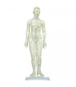 48 cm Female study model for acupuncture (code S13)