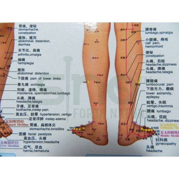 Foot and lower leg map for acupuncture, meridans and ...