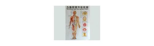 Harti acupunctura